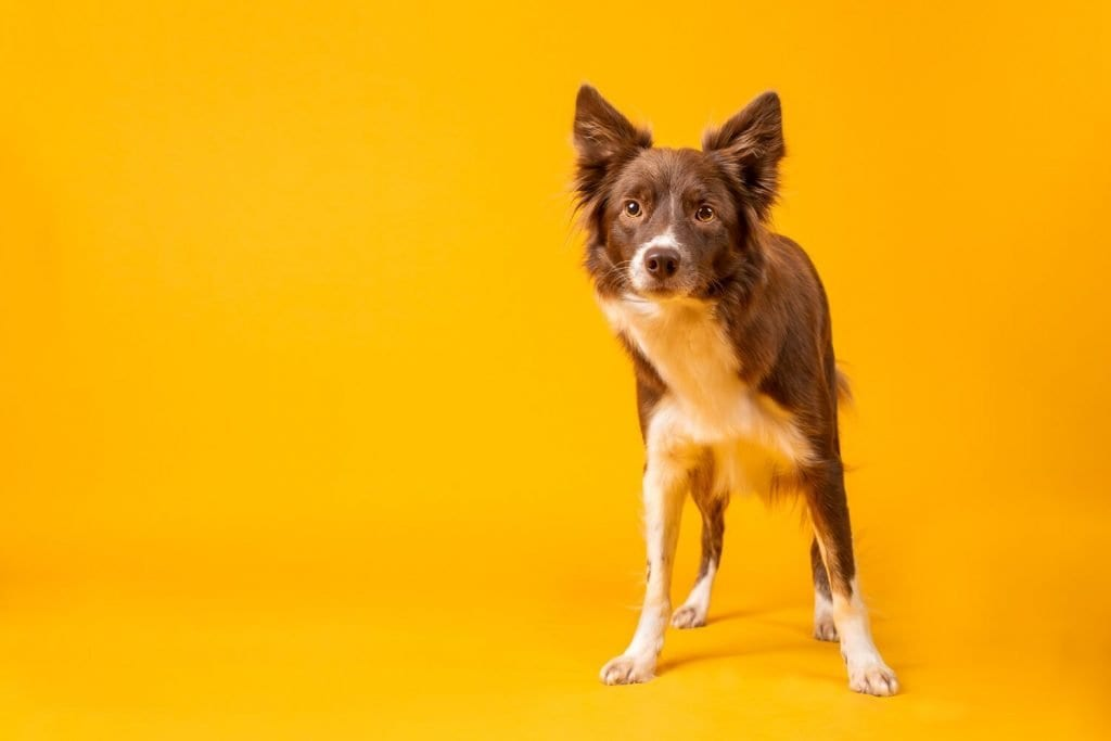 That Dog Spot - Dog photography blog
