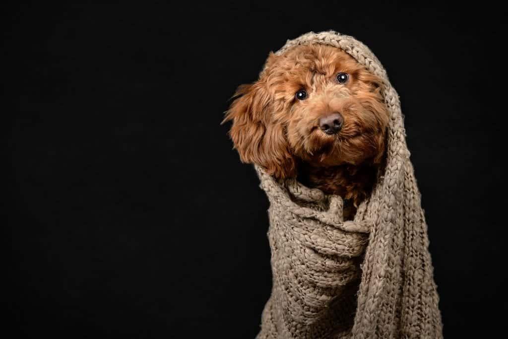 xThat Dog Spot - Dog photography blog
