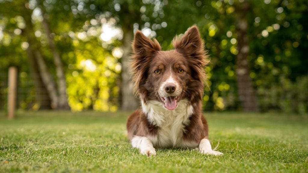 10 tips for dog photography