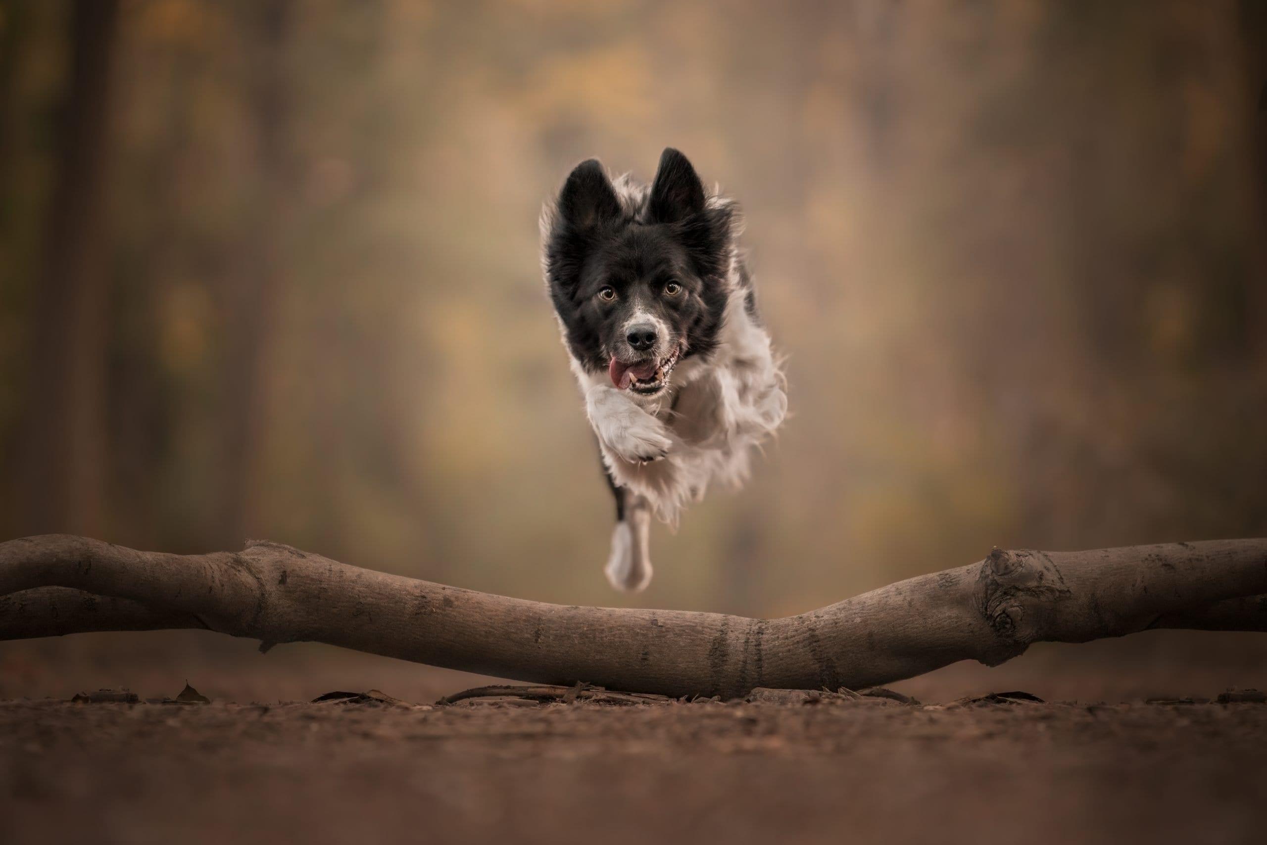 that dog spot portfolio
